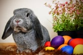 Hey, Easter Bunny — Here's How to Save on Everything for This Year's Celebration