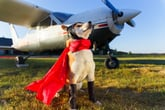 Flying With Your Pet? Here's What You Need to Know First