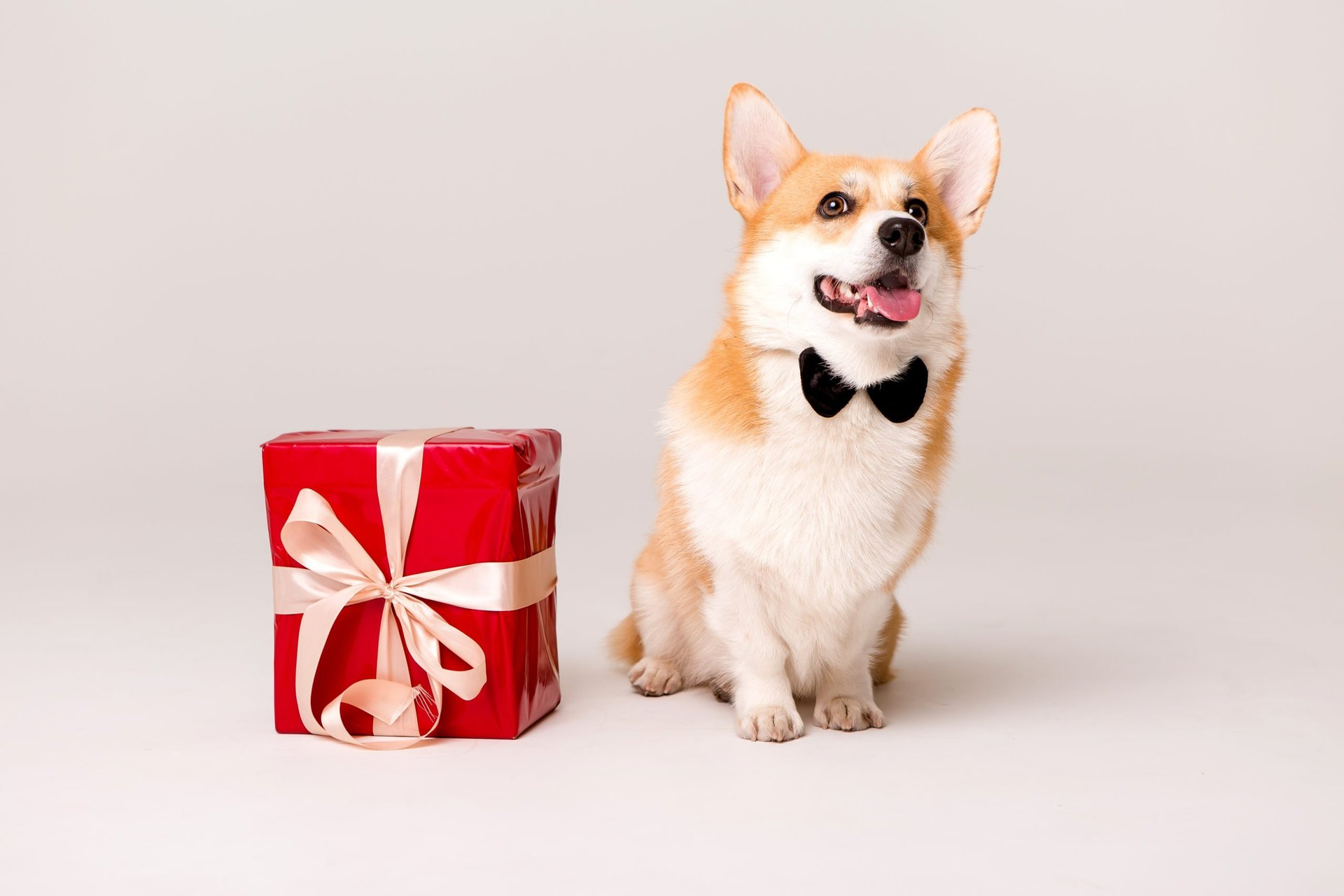 Dog next to a gift