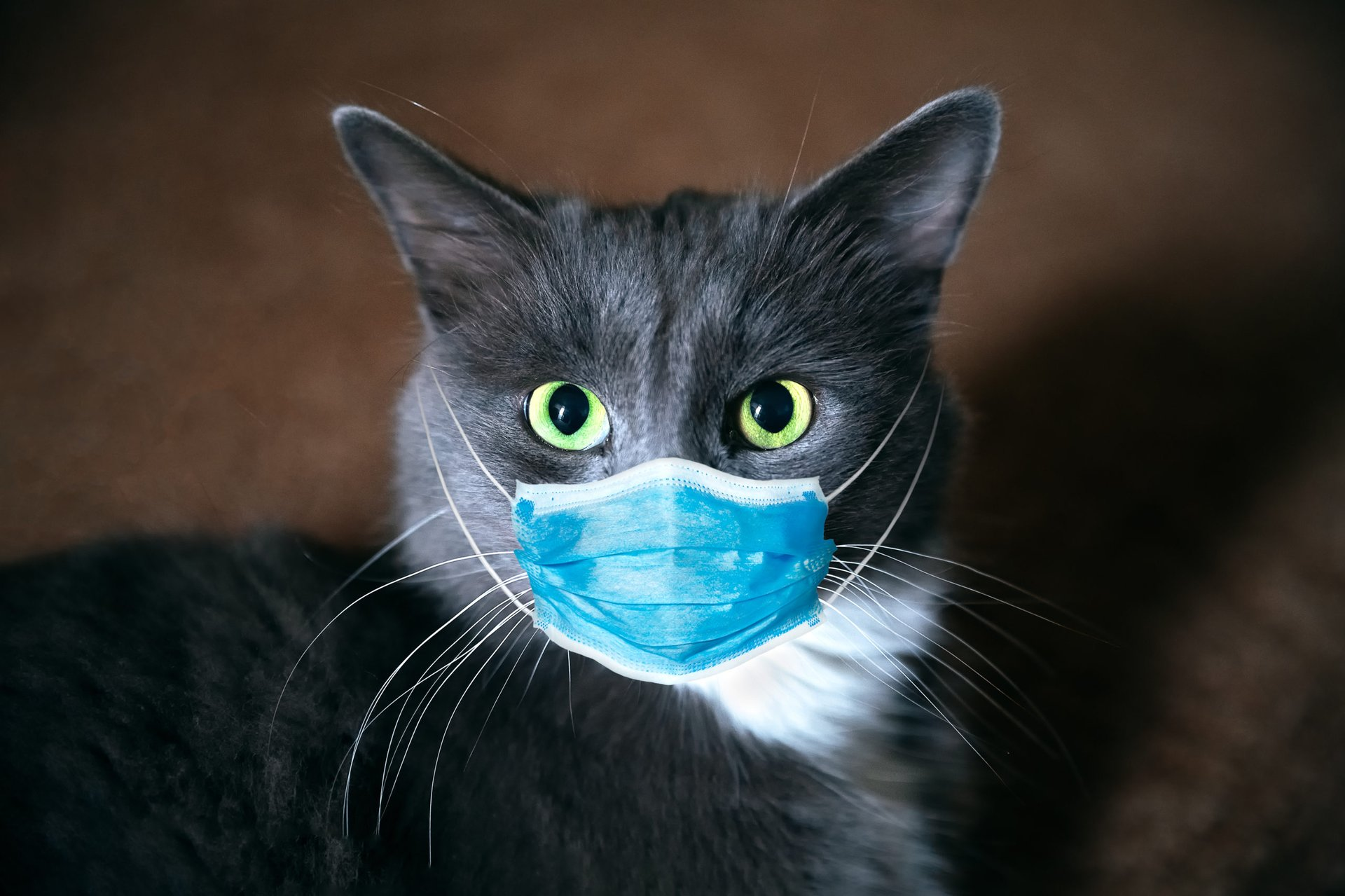 Cat with mask