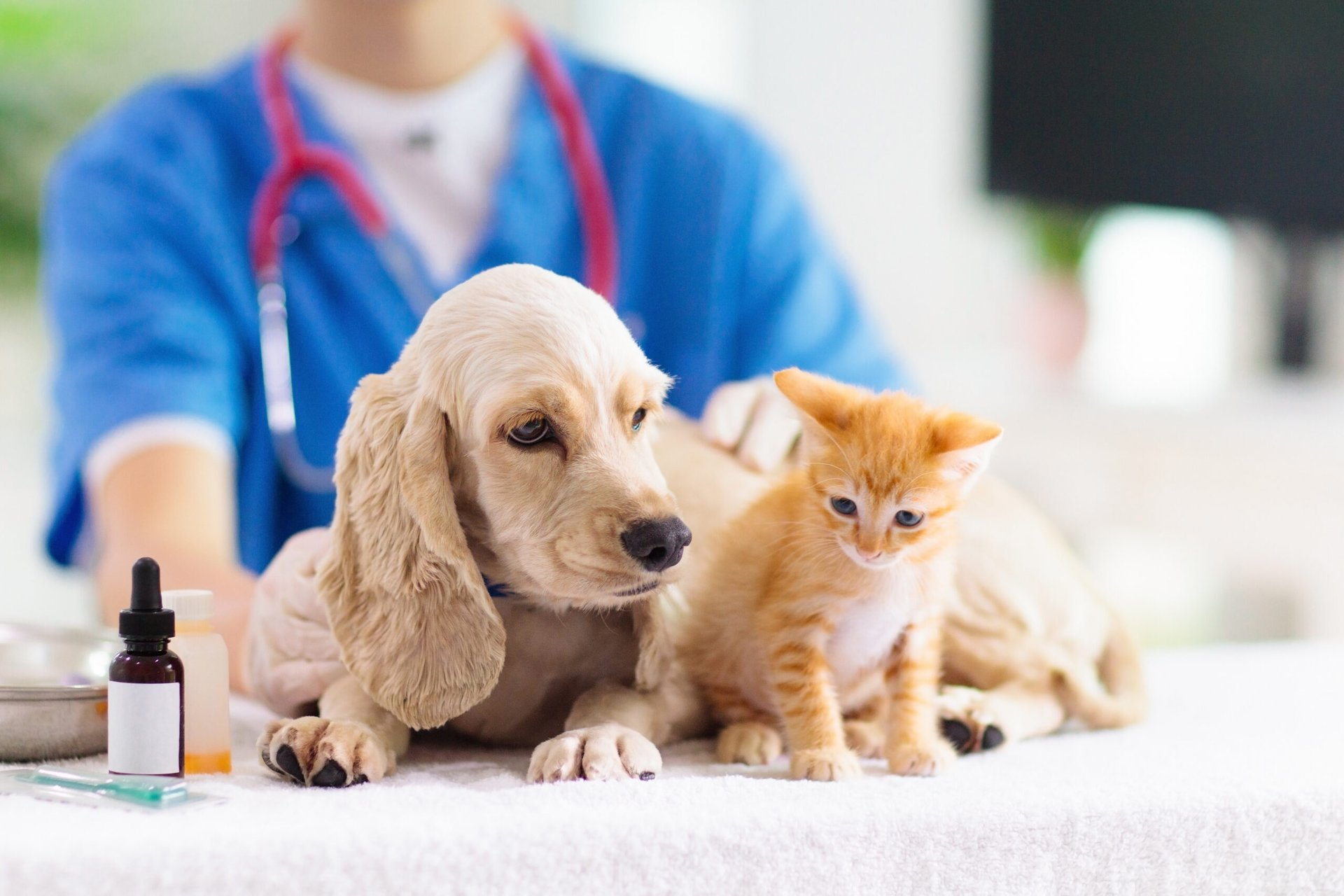 Pets at the vet