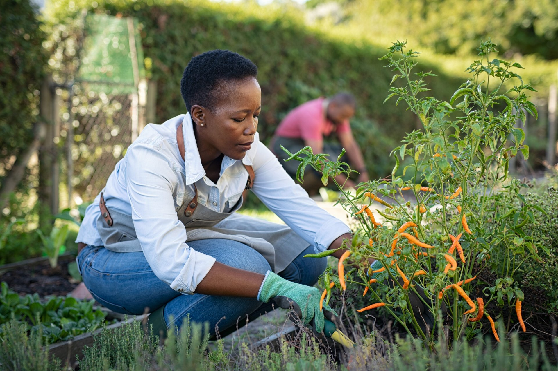 Woman tending to peppers in a vegetable garden