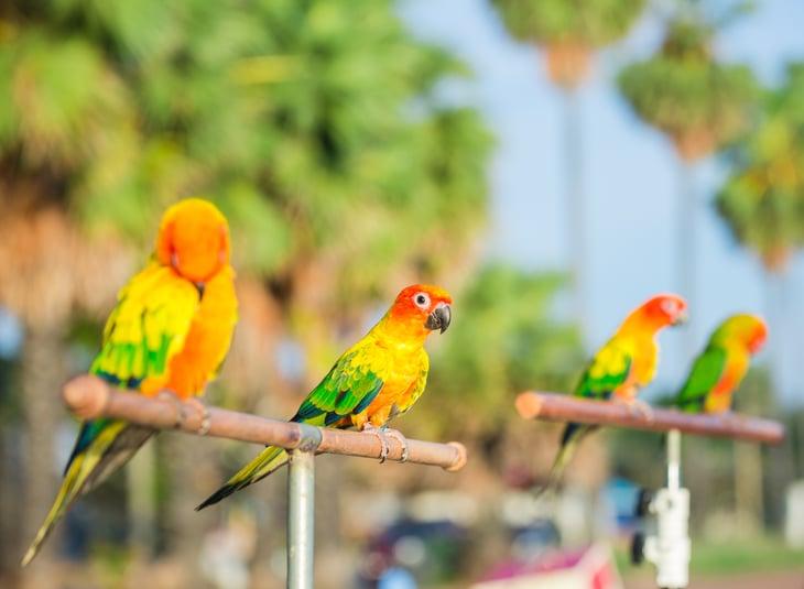 Parrots sit atop perches