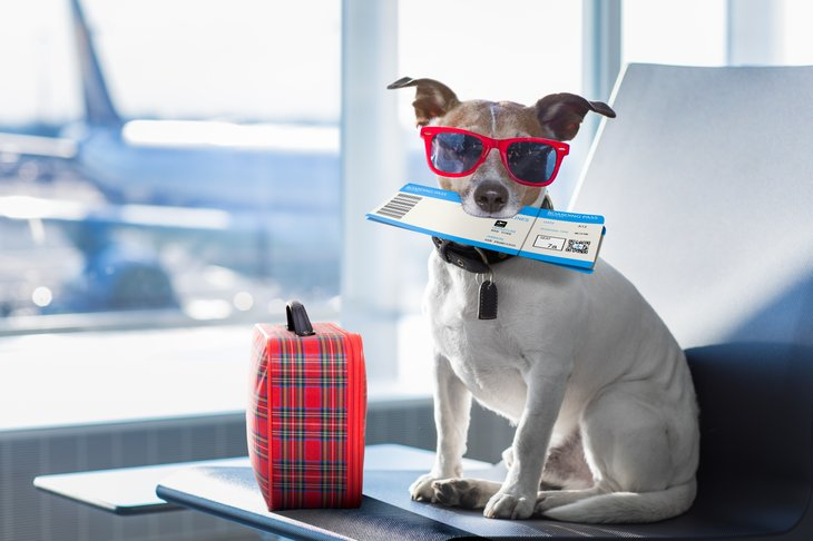 Dog at airport, with sunglasses and ticket.