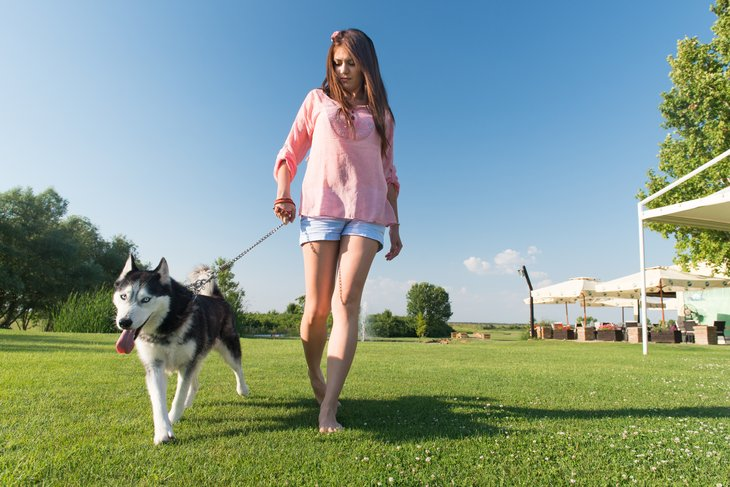 Walking dogs is a great way to stay in shape over the summer, as well as earn a little money.