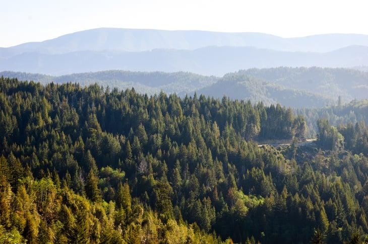 Forest Overlook at Redwood National Park.