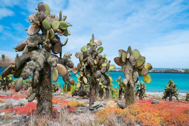 The beautiful and biologically diverse landscape of Galapagos South Plaza island.