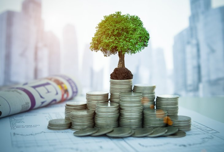 A tree symbolizing investment growth