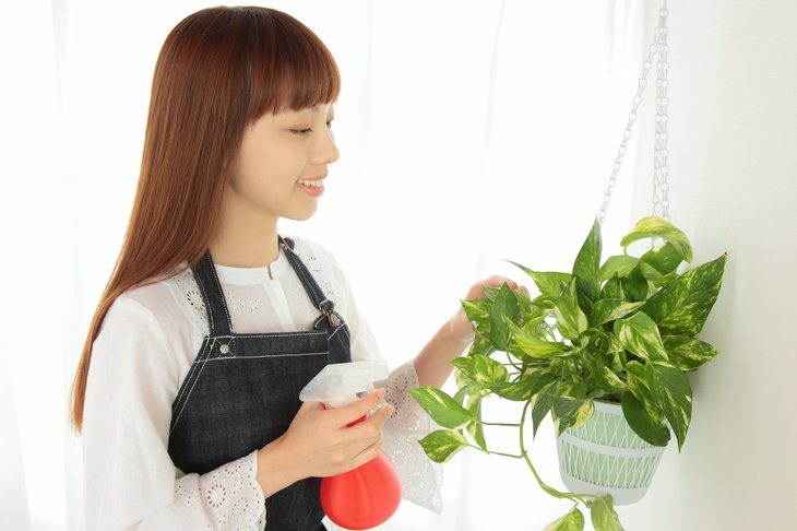 A woman waters a pothos houseplant