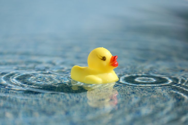 Yellow rubber duck in clear blue water