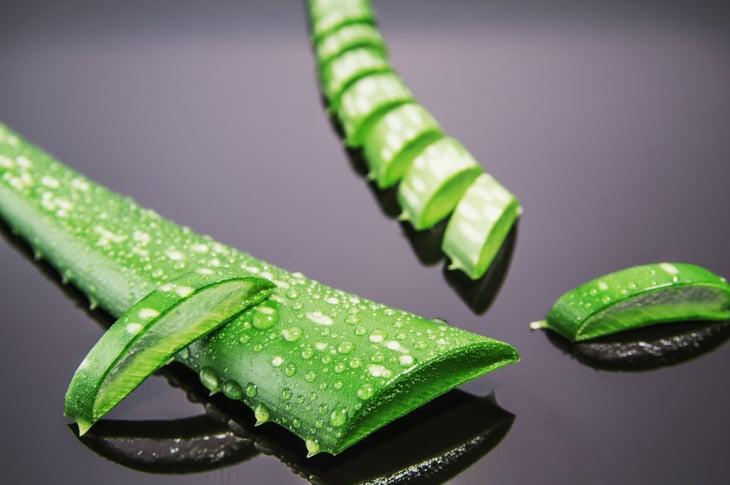 Cut aloe vera leaves
