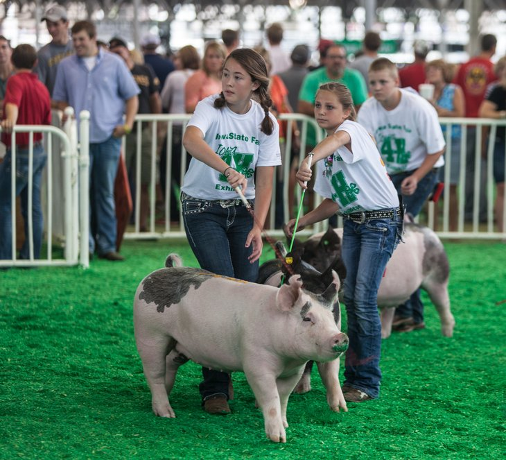 These kids are learning what it takes to work with farm animals in 4-H.