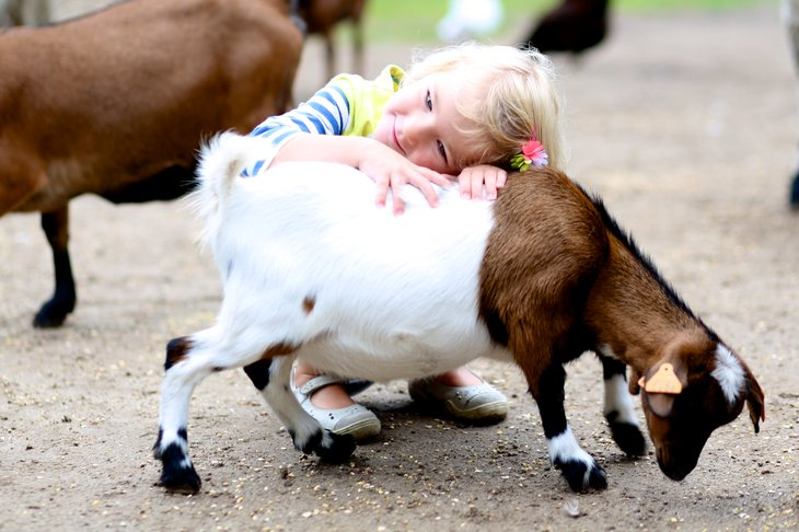 Petting zoos and small farms that cater to young visitors provide a great and often inexpensive way to give kids a chance to get closer to farm animals.