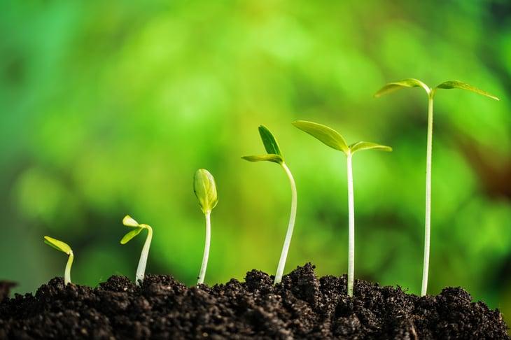 Seedlings growing in black soil