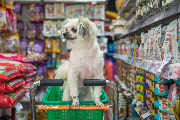 Little white dog in grocery shopping cart.
