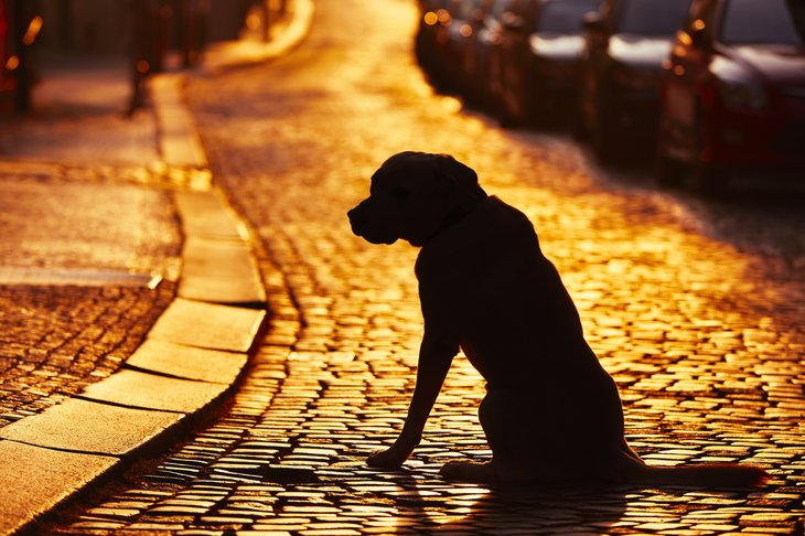 Dog on cobblestone street.