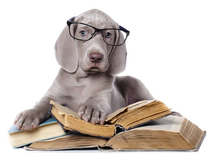Grey hound wearing glasses, one paw on a stack of books.