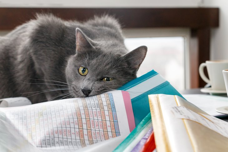 Cat lying on paper/documents.