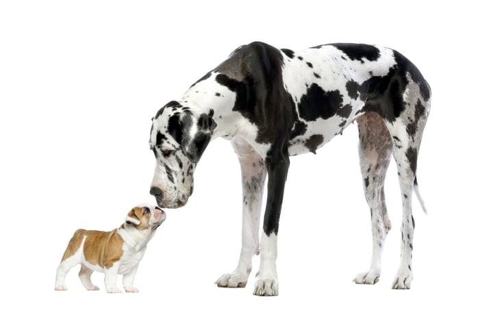 Puppy w Dog