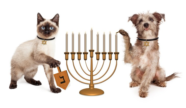 Dog and cat with menorah