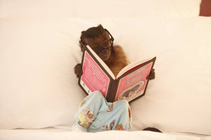 Crystal the monkey reading.
