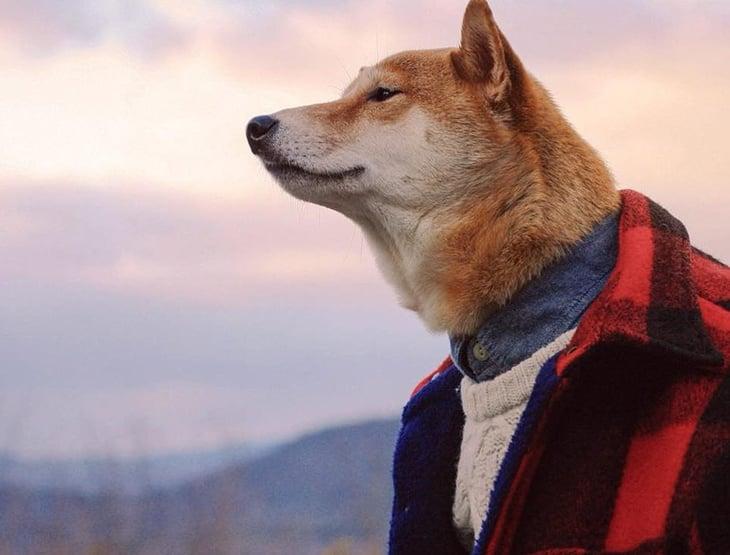 Bodhi, the Menswear Dog, in Lumberjack shirt.