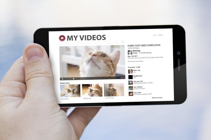 Vidéos de chat
