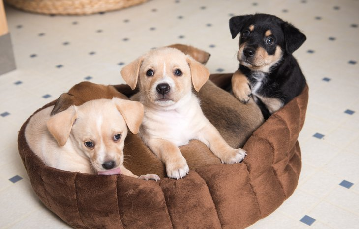 Puppies on a dog bed.