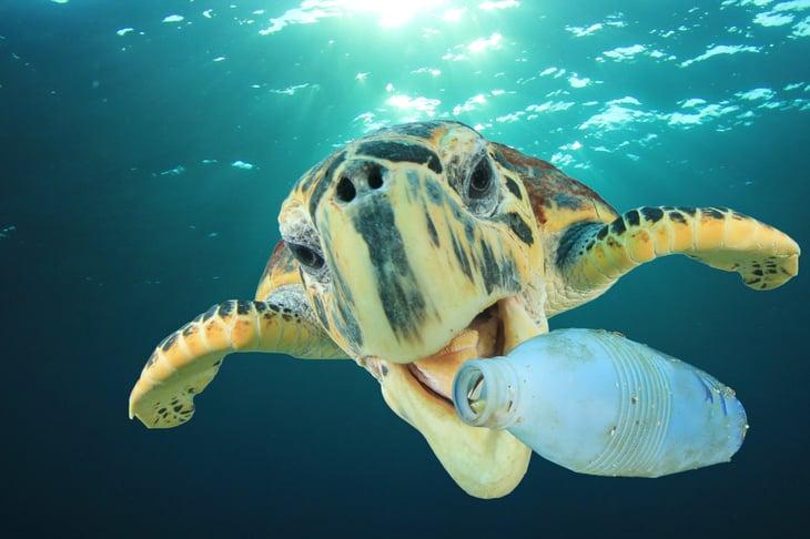 Sea turtle and plastic bottle
