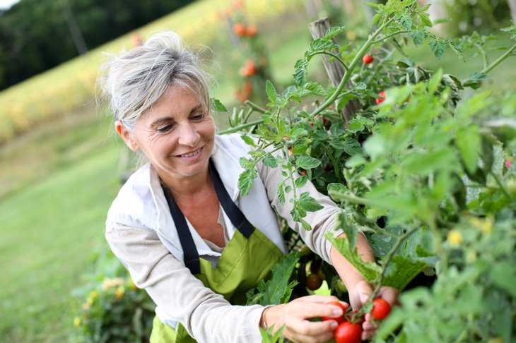 Woman picking tomatoes in her garden
