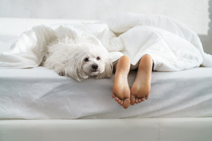 Black girl in bed morning tired African American woman sleeping white dog bedroom bare feet