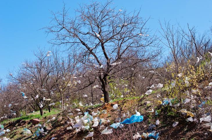 plastic bags tree garbage dump