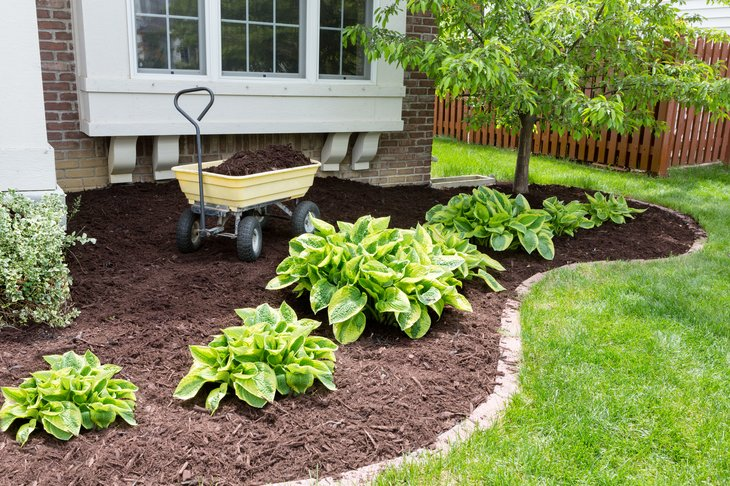 Garden bed with mulch