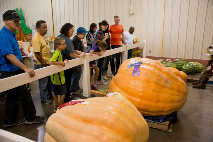 People in Kansas looking at large pumpkin