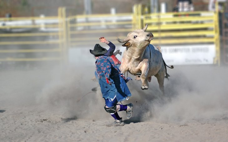 Rodeo clown and steer