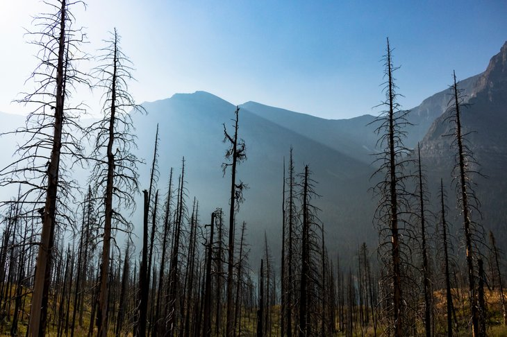 Burnt forest in mountains