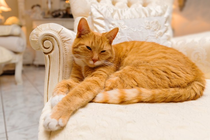Cat lounging on chaise