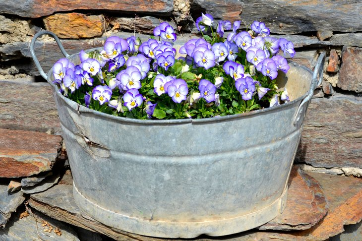 Flowers in a wash basin