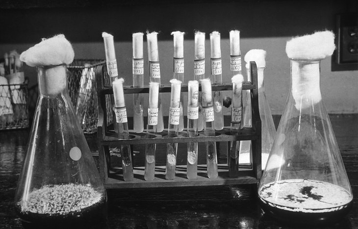 Test tubes in a lab, penicillin