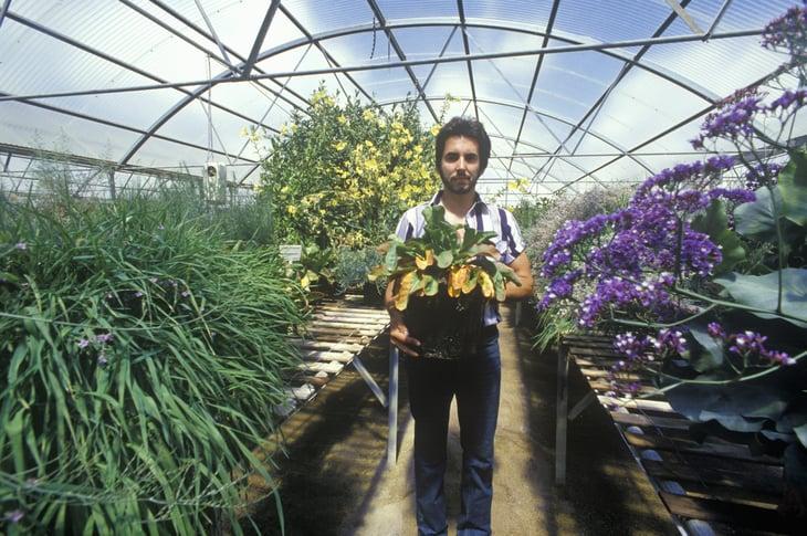Worker in greenhouse