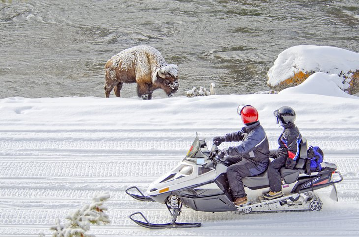 Snowmobilers pass a bison in Wyoming
