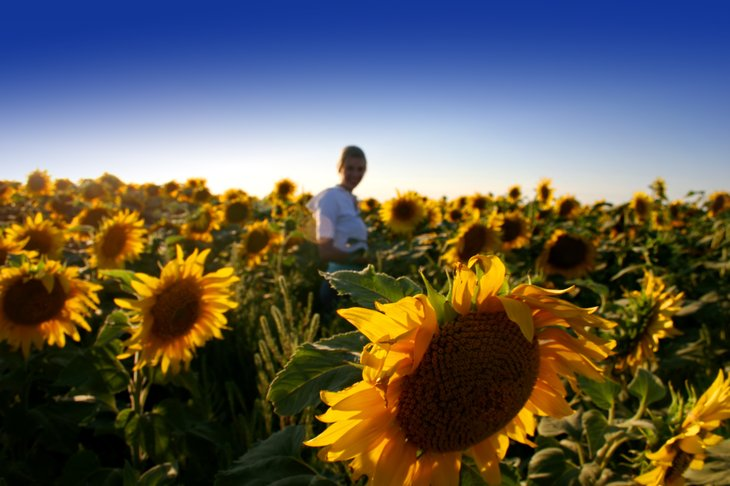 North Dakota woman in sunflower field