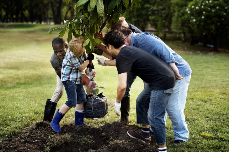 work together help diverse group plant tree
