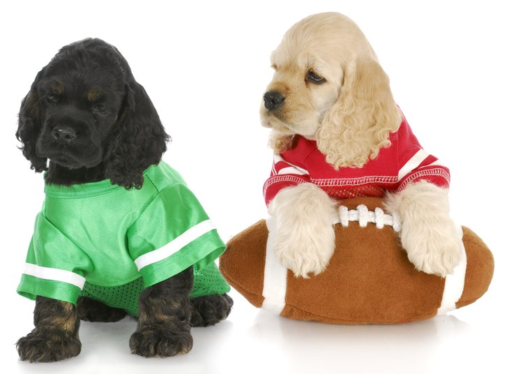 Puppies with a football