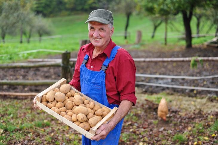 Potato farmer