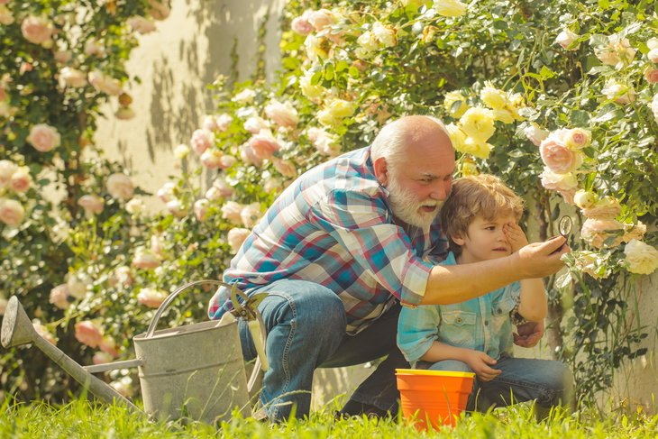 Grandfather retirement retiree child man boy sunny garden roses. Retirement planning
