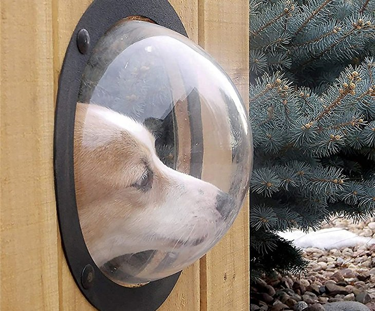 Dog bubble window in a fence