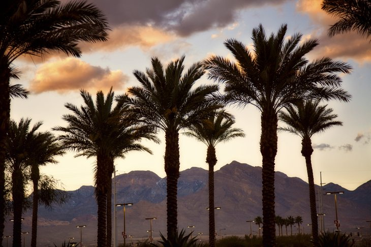 Palm trees at sunset in Paradise, Nevada