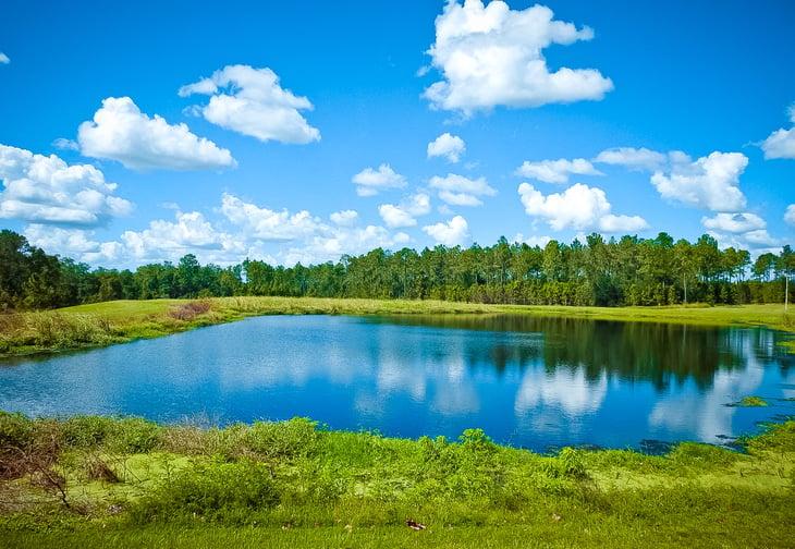 Wesley Chapel, Florida landscape