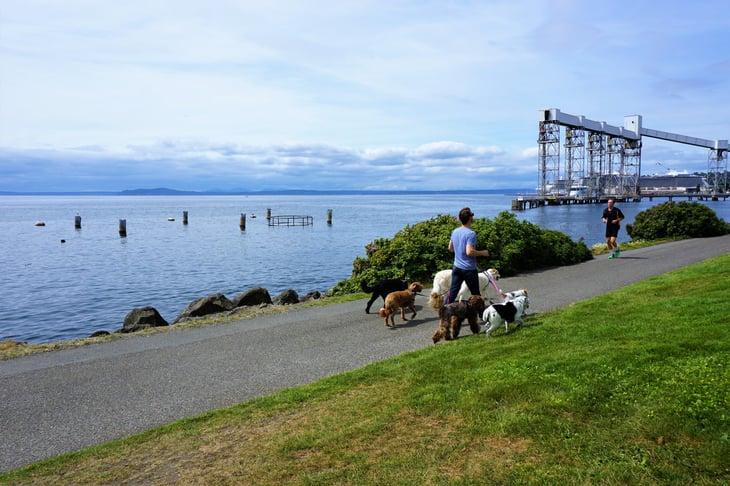 Seattle runner dog walker